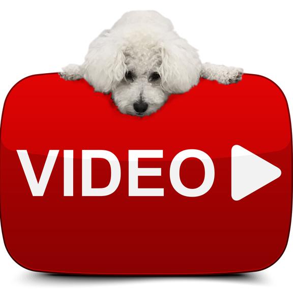 Video Charlie Image 2017 Dog 8x8